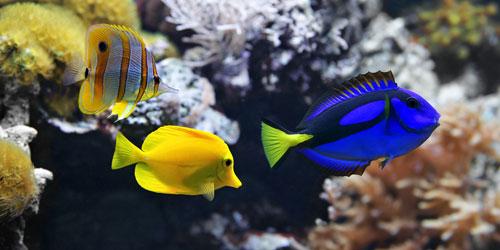 Tang Aquariums