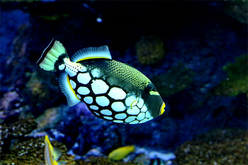 Triggerfish Aquariums