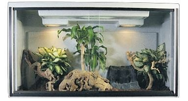 Bearded Dragon Cages, Water Dragon Cages | Vision Cages