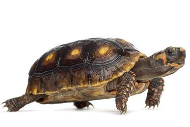 tortoise cage