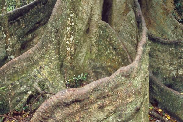 Closeup Roots