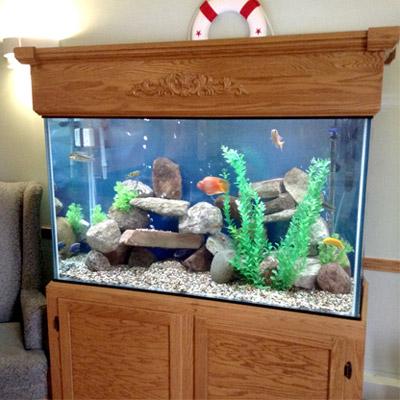 Majestic Custom Aquariums